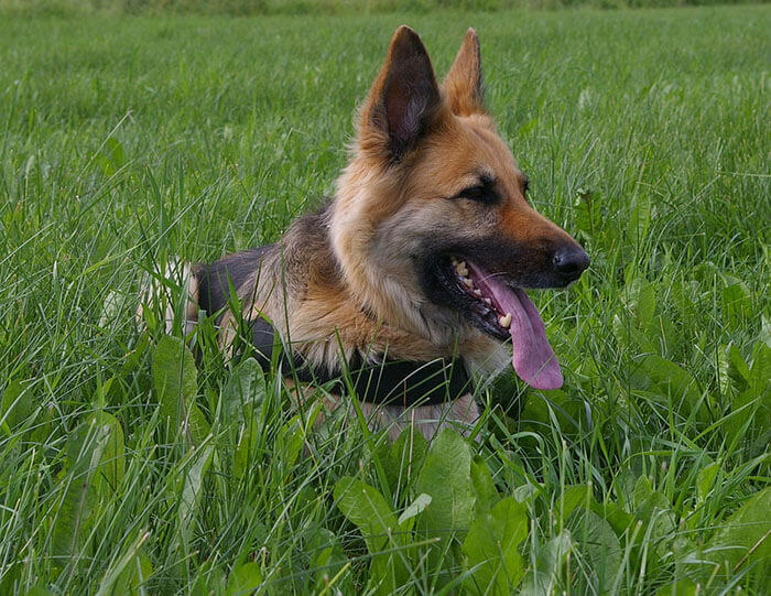 Best wireless dog fence - collar