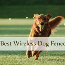 Wireless dog fence Thumbnail