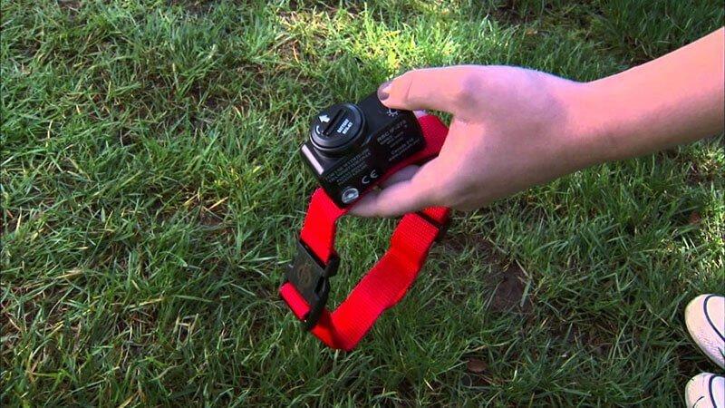 wireless dog fence collar