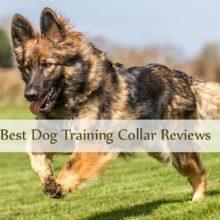 Dog Trainng