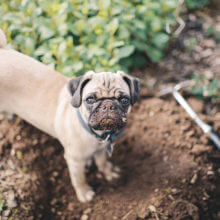 how-to-keep-dogs-out-of-your-yard-constructing-moat