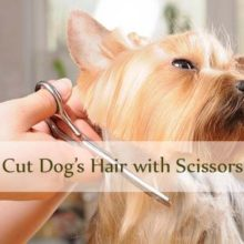 How to Cut Dog Hair with Scissors Thumbnails