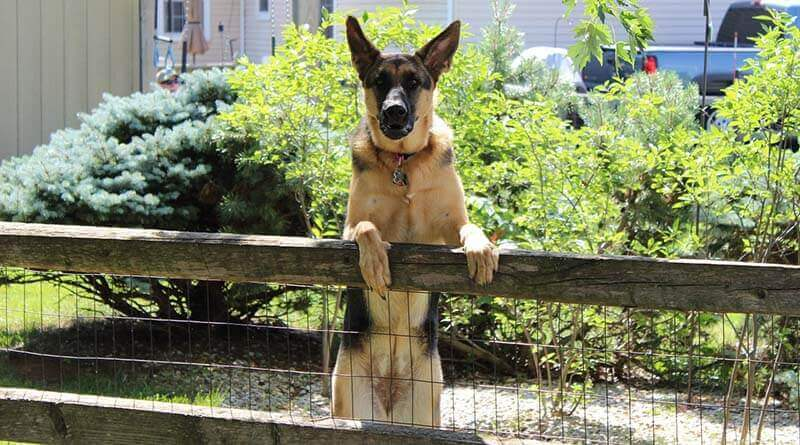Dog Jumping Fence Solutions
