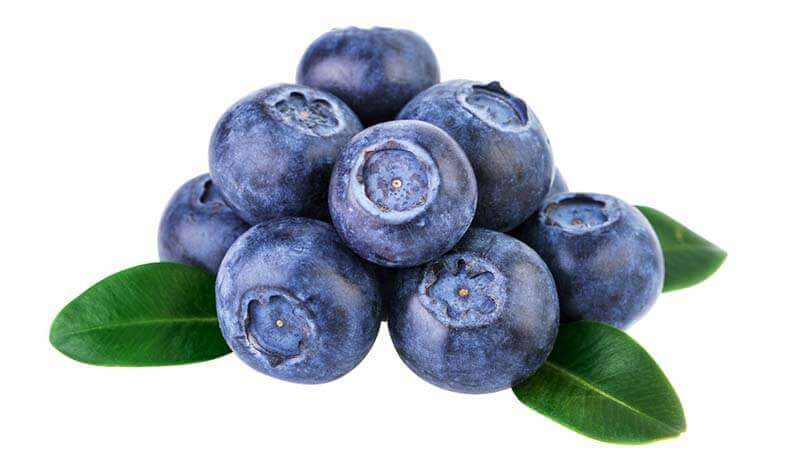 Can Dog Eat Blueberries?