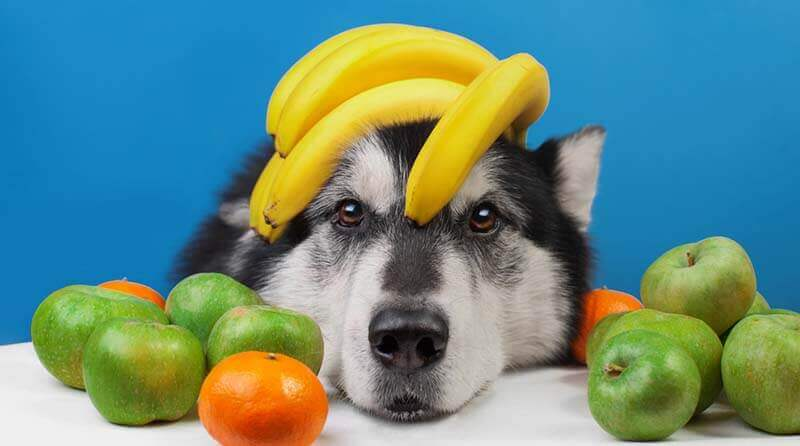 fruits dog can eat