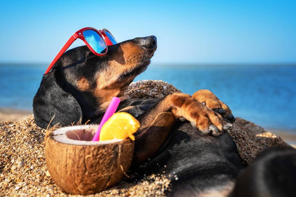 Can a dog drink coconut water